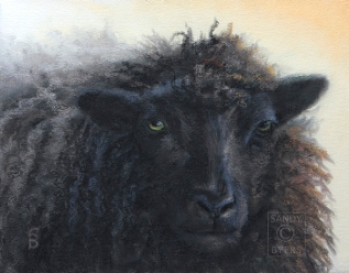 Moe SOLD (11x14 dry pastel). Moe, because he's mo' woolly than the others.