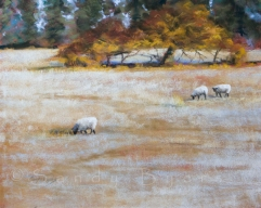 Frosted Woolley Fields $1100 (16x20 dry pastel). baaa, burrr. sometimes a llama, sometimes cows, sometimes these guys. i just can't be picking favorites.